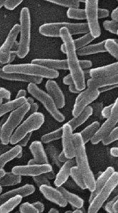 Mycobacterium smegmatis. From 10.1371/journal.pone.0042769