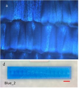 The amazing blue of the real Morpho didius wing (above) and its nanofabricated doppleganger (below) doi: 10.1038/srep16637