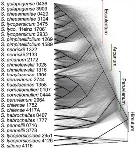 2,500,000 years of tomato evolution. Credit: 10.1371/journal.pbio.1002379.g002