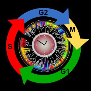 The clustering of ZCOGs on zebrafish metabolic network. Image credit: Ying Li et al.