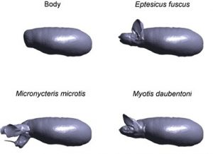 Some of the 3D models of bats used in this study. doi:10.1371/journal.pone.0118545.g001