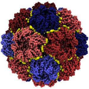 PLOS Comp Biol Featured Image for November. Image Credit: Guido Polles