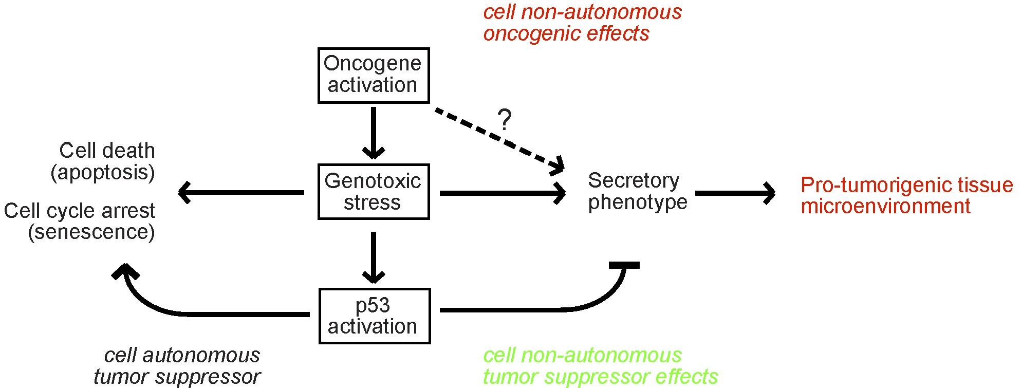 Cell-autonomous and cell-nonautonomous roles of p53 (Coppé et al., PLOS Biology).